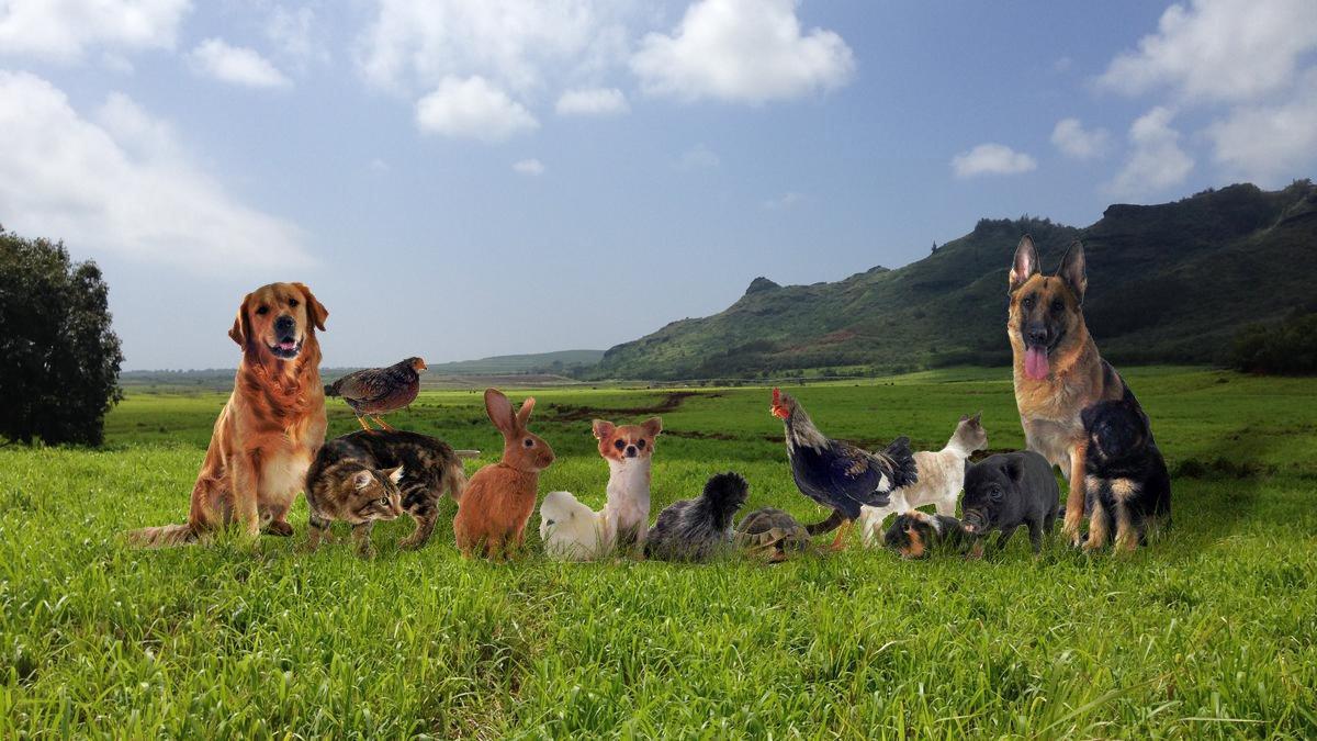 farm-pets-1